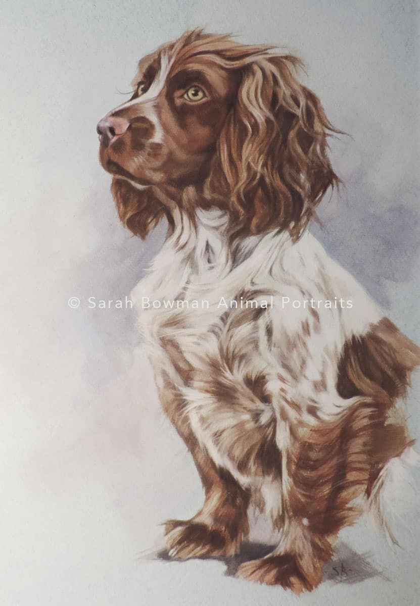 dog portrait in gouache