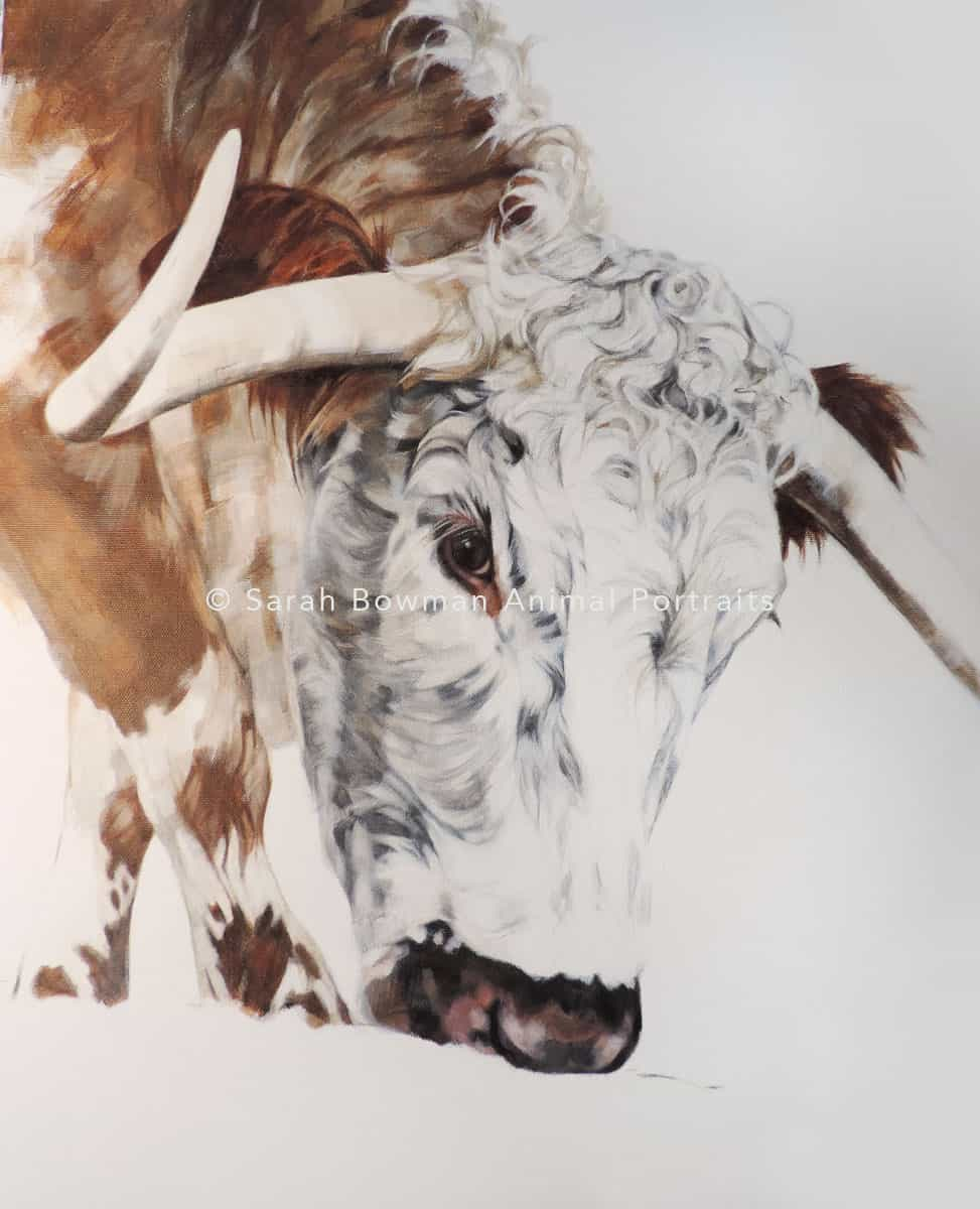 animal portraits featuring cows and bulls