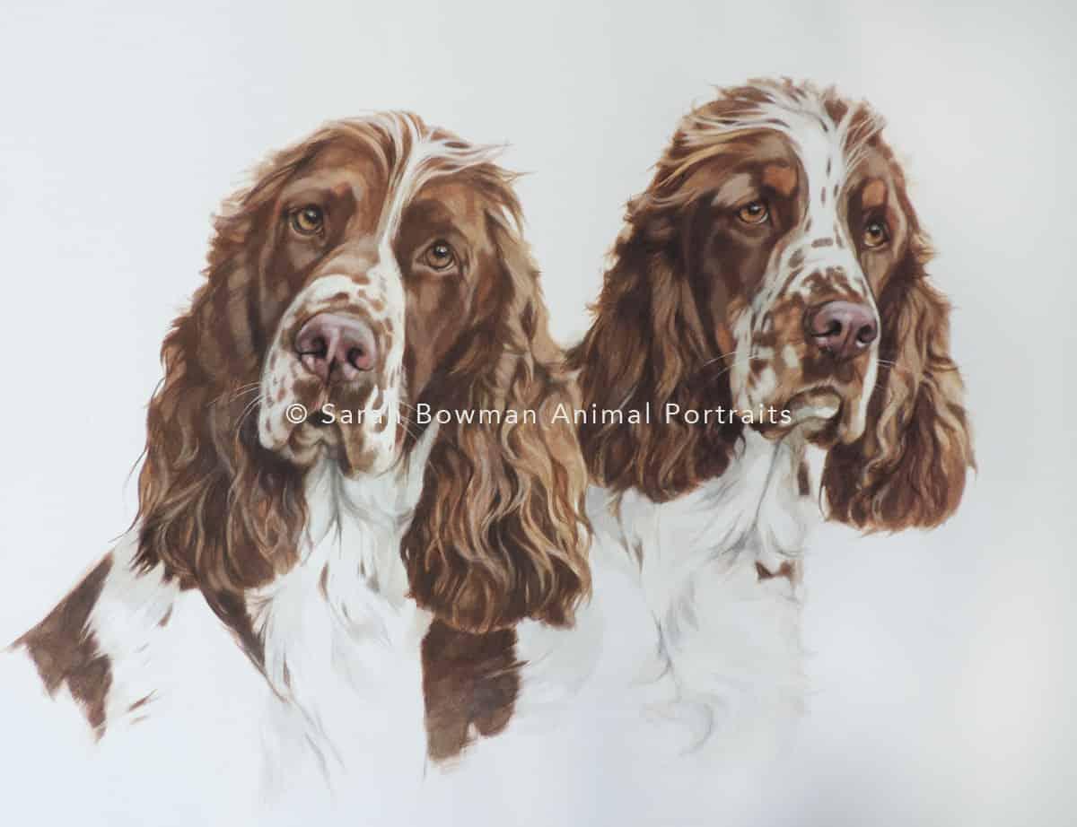 Group animal portrait dogs