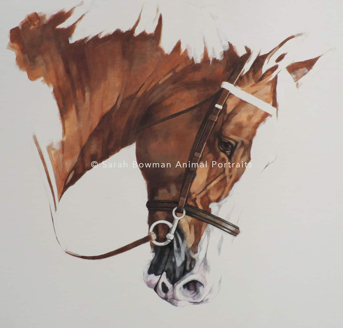 Horse portrait work in progress