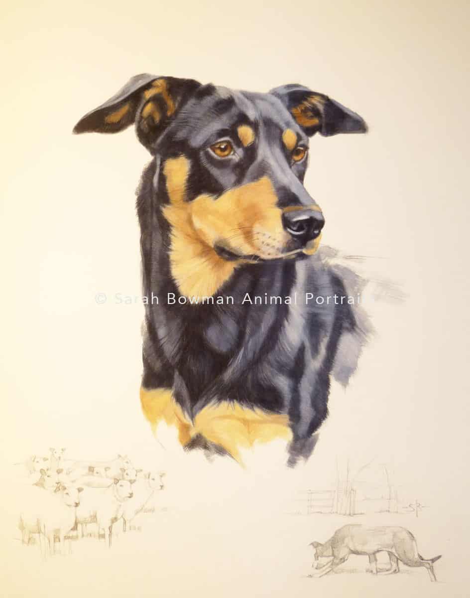 montage dog portrait