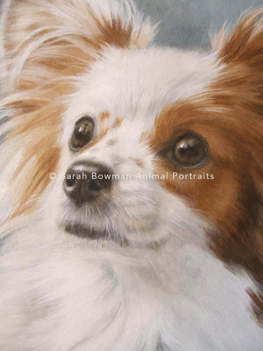 Dog portrait in acrylic