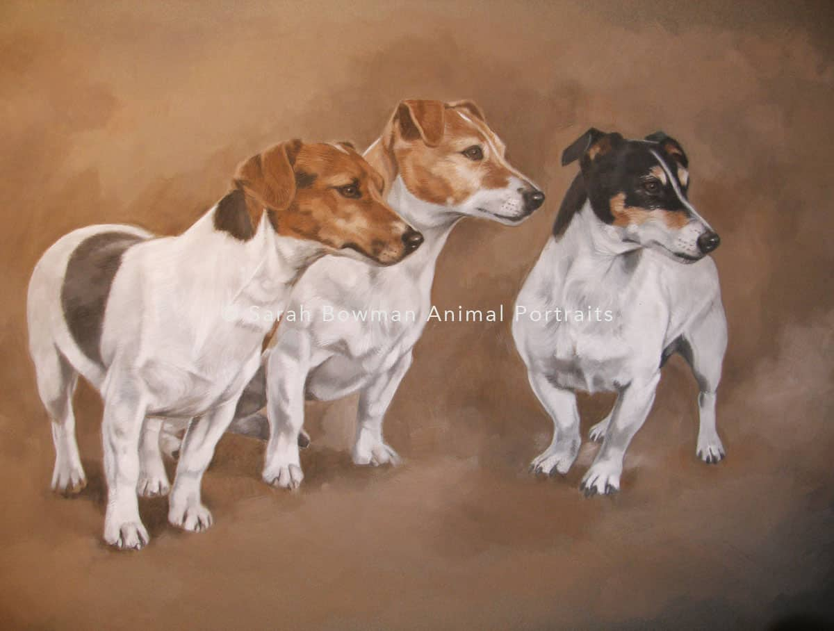 jack russell animal portrait