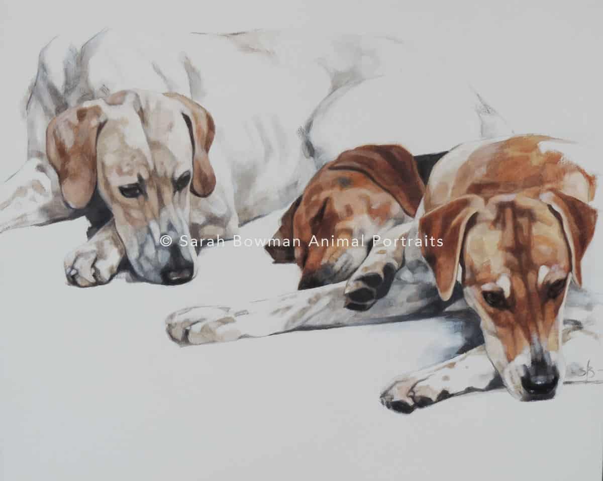 animal portrait of resting dogs