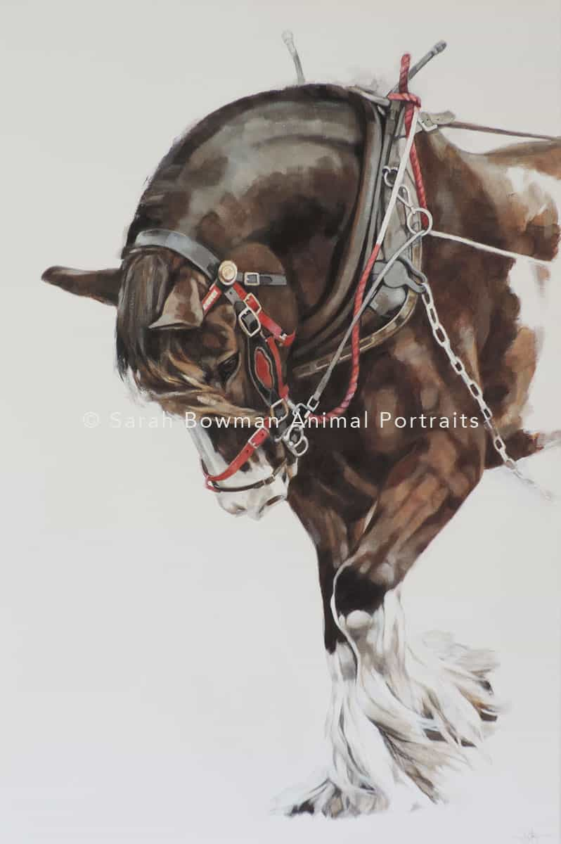 Working horse portrait