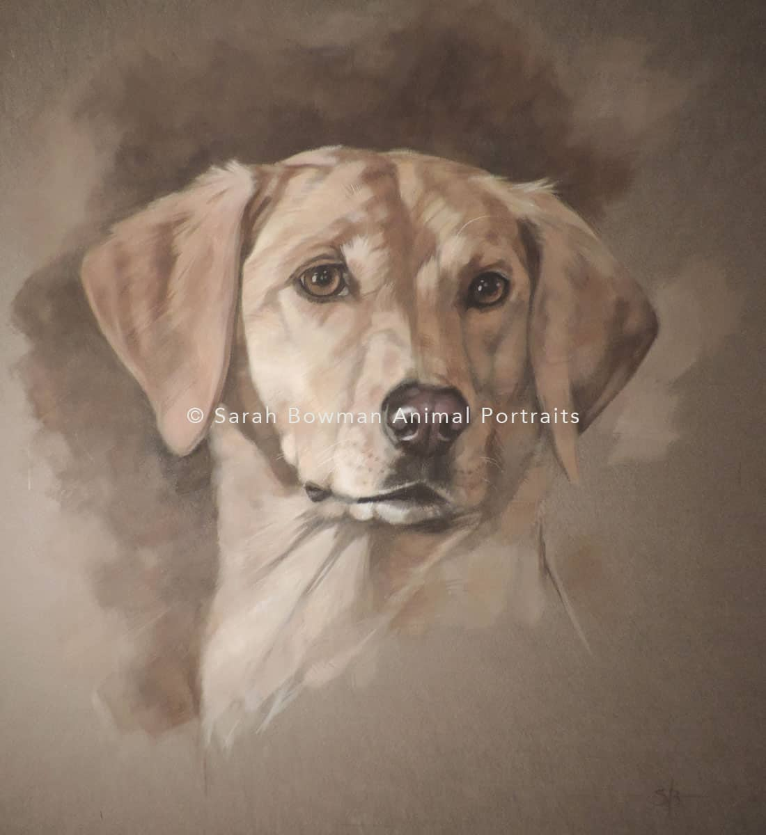 Golden Labrador Retriever animal portrait