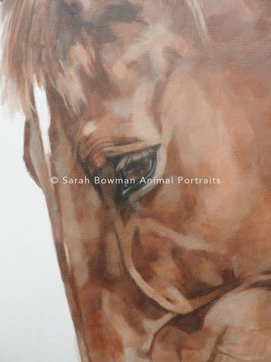 detail of horse portrait