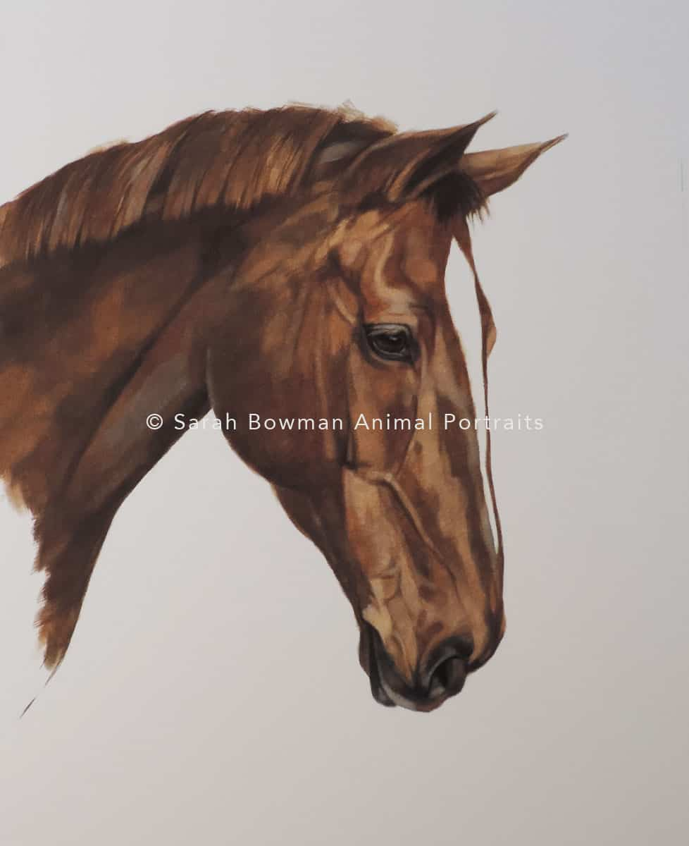 Brown Horse Portrait
