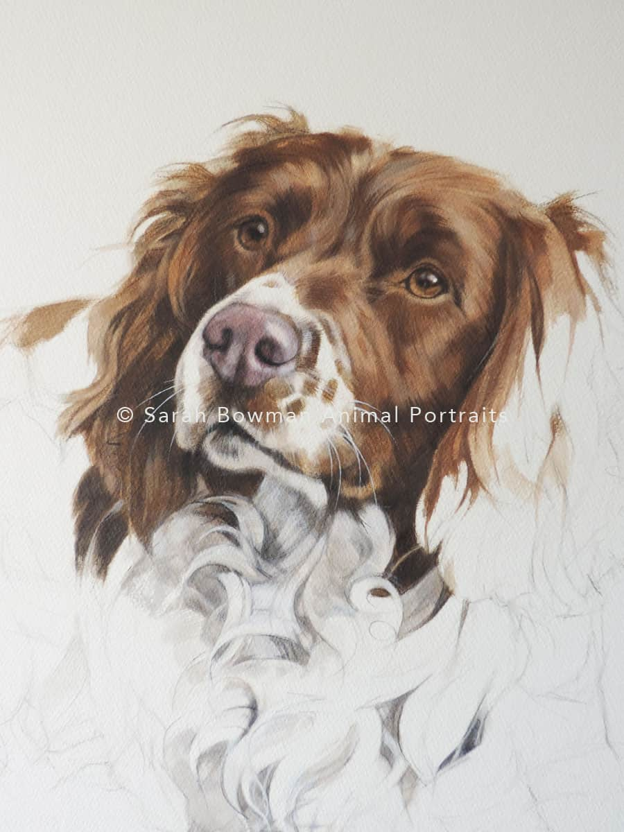 Unfinished Spaniel dog portrait close up