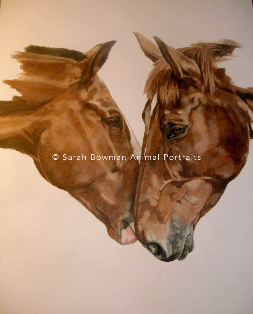 Two horses animal portrait