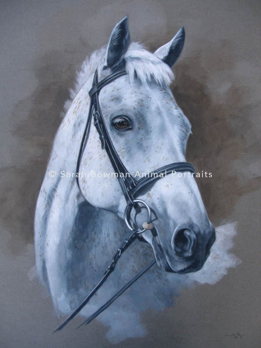 grey horse portrait