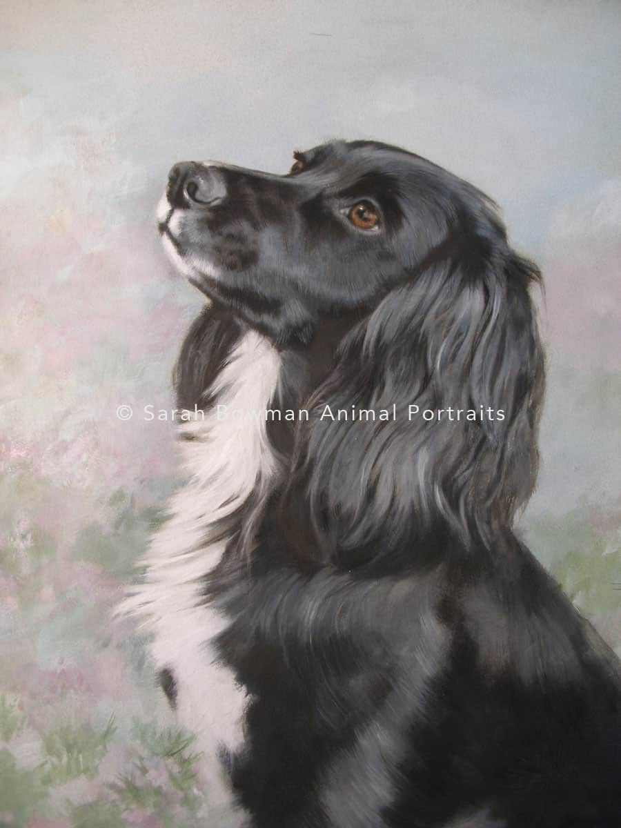 black and white spaniel dog portrait