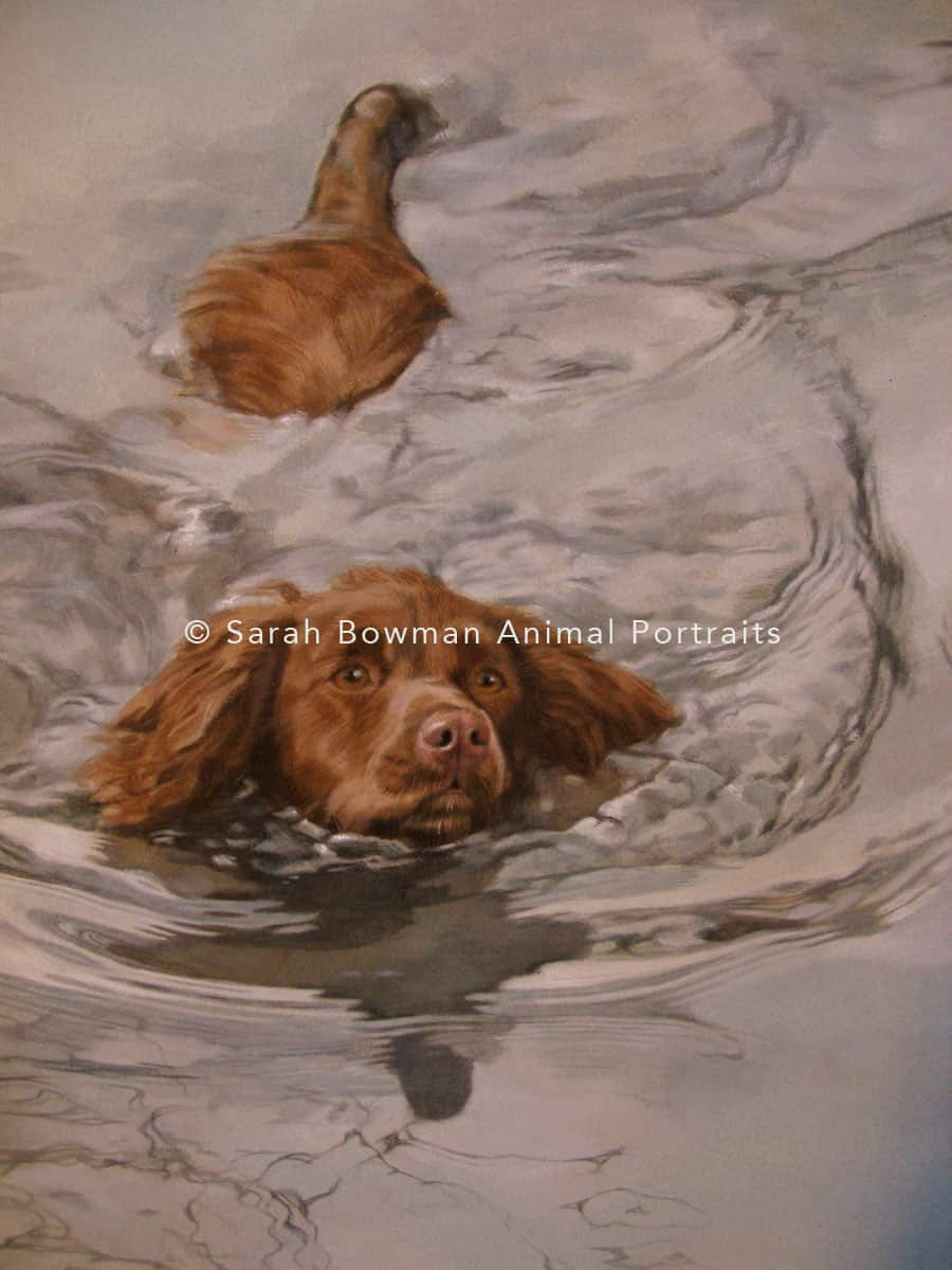 Swimming dog portrait