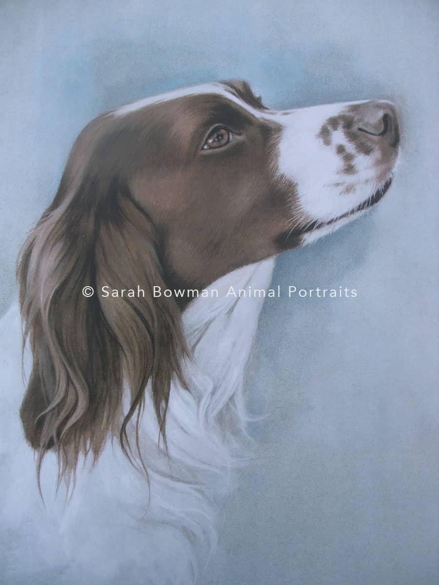 profile dog portrait