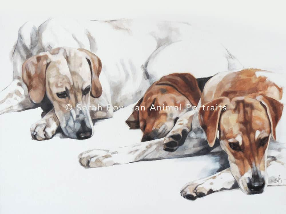 dog portraits - dogs sleeping