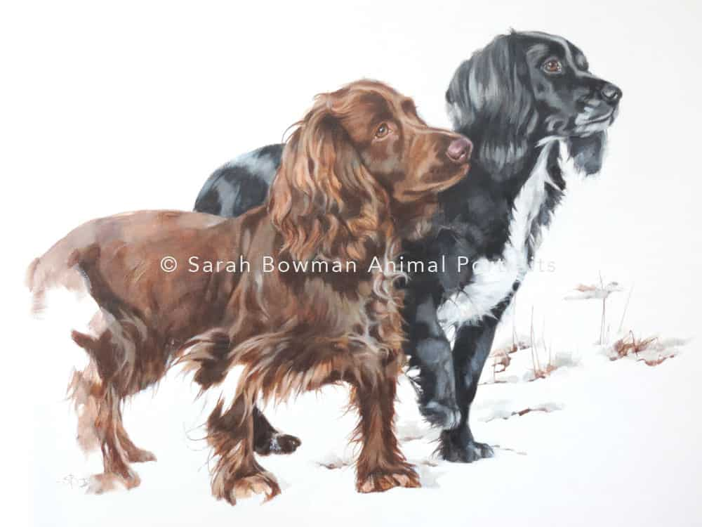 dog portraits - 2 spaniels