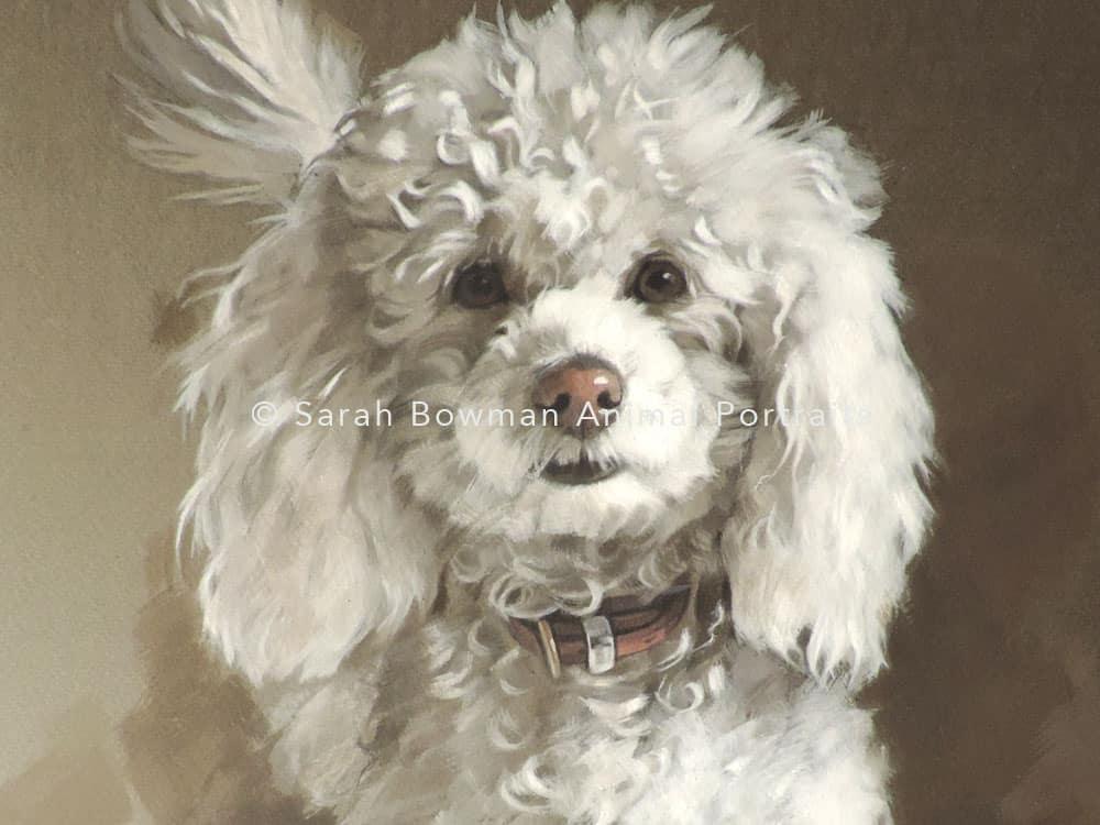 dog portraits - young puppy portrait