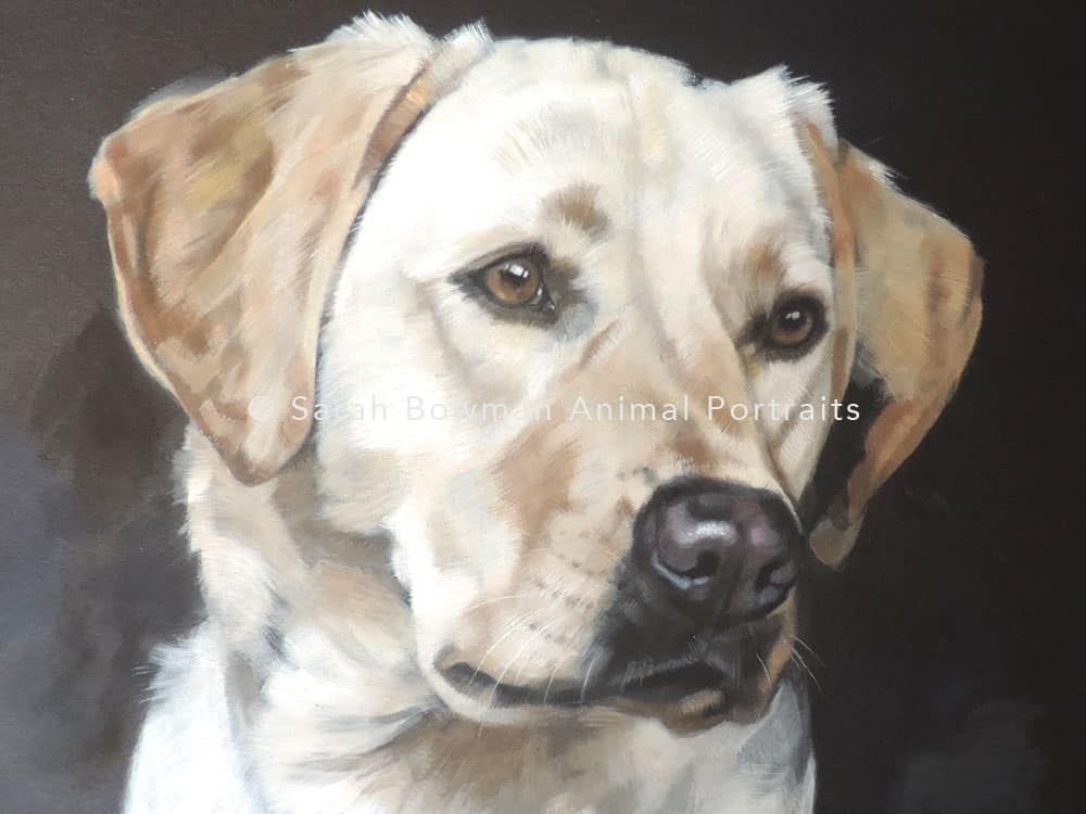 dog portraits - labrador retriever portrait