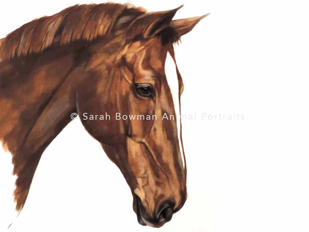 brown horse portrait artist