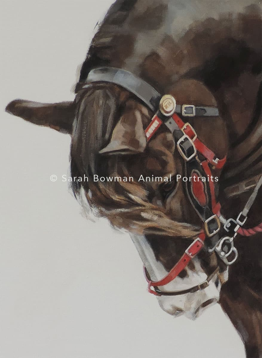 Working horse portrait close up