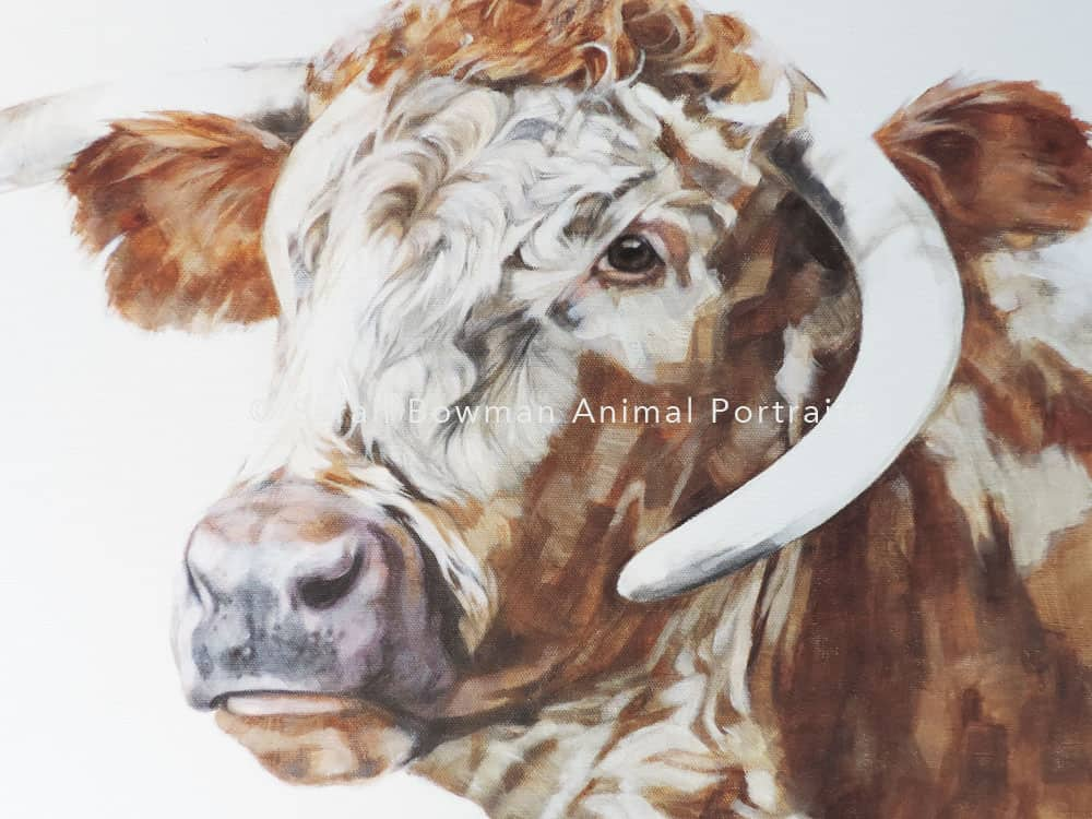 pet portrait of cow