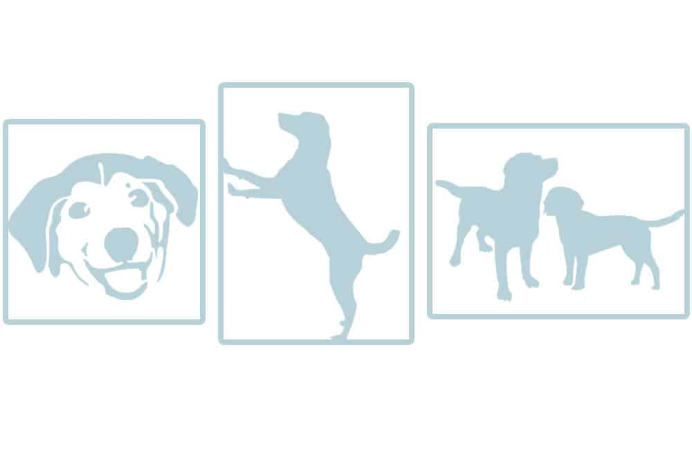 specification stage of commission an animal portrait