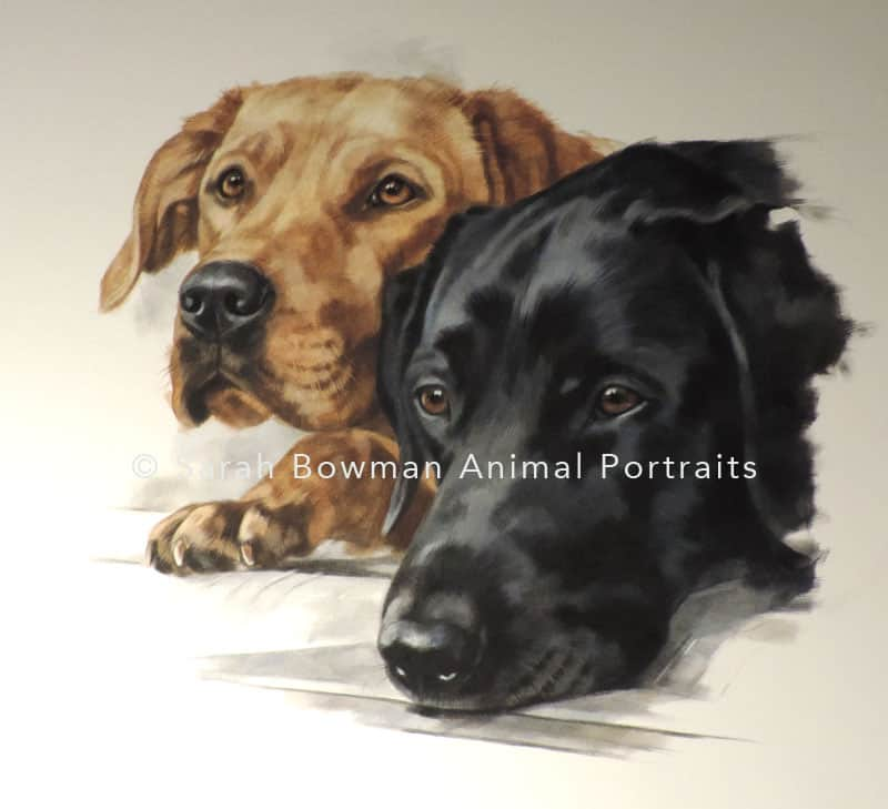 two labradors dog portrait
