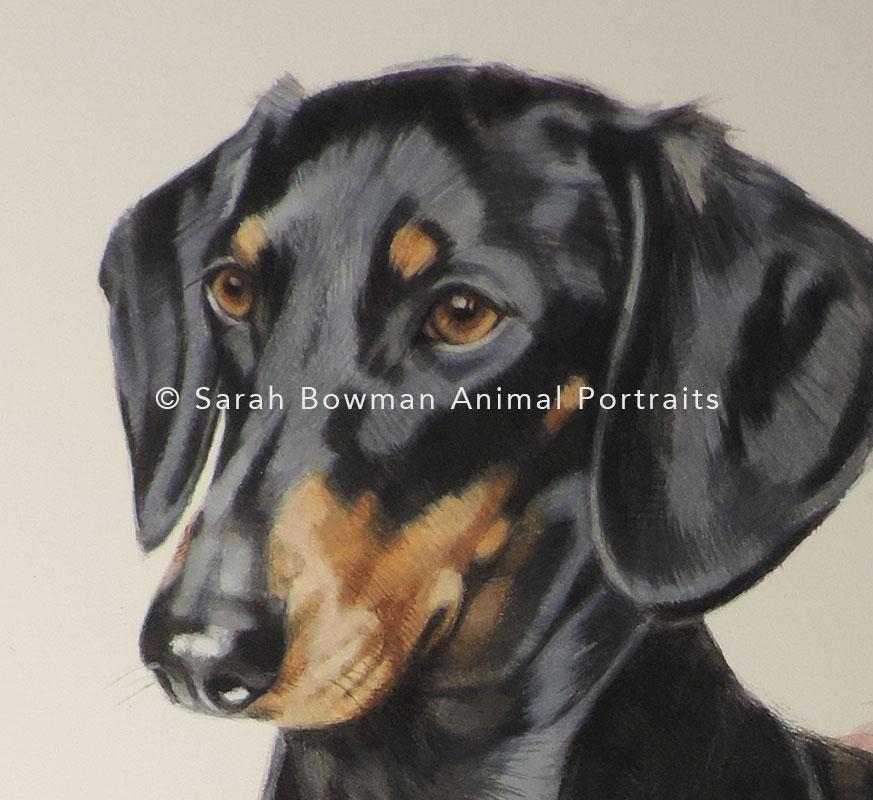 dog portrait of daschund - close up