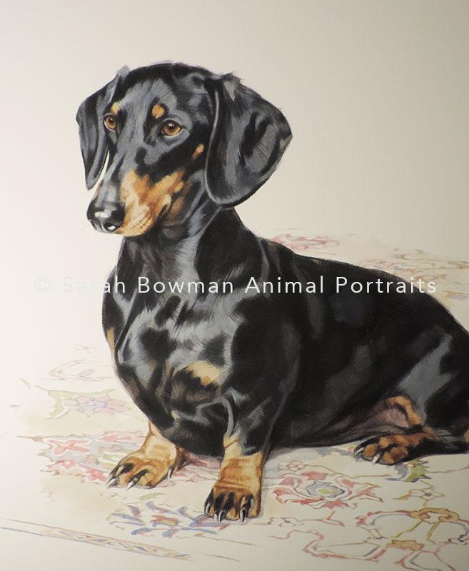 dog portrait of daschund