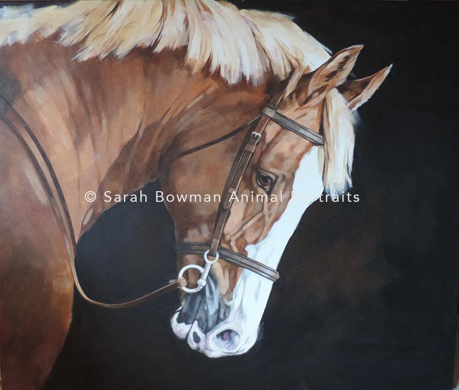 horse portrait on dark background